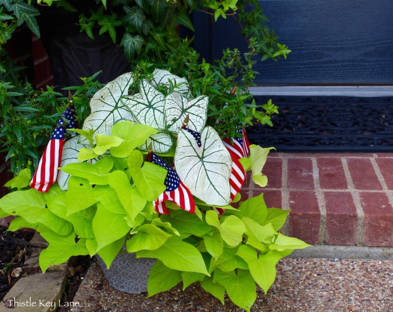Plants with the stars and stripes added
