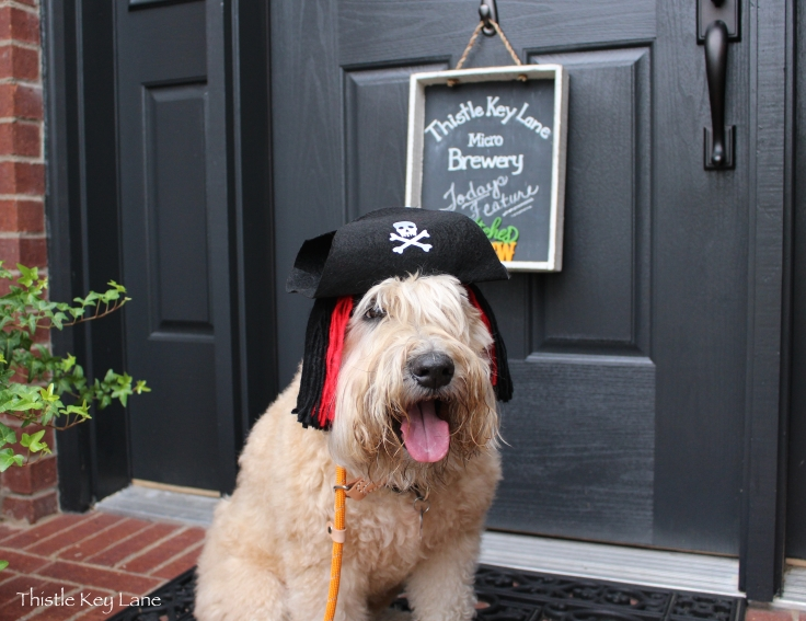 Sandy in her Halloween Pirate Hat