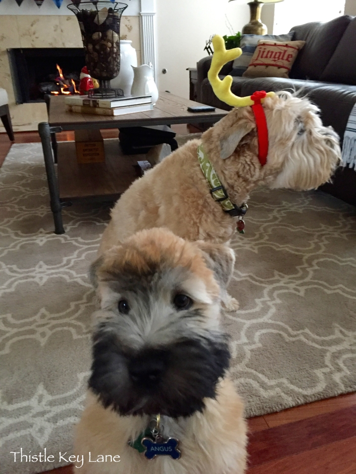 The antler is curtesy of Petco