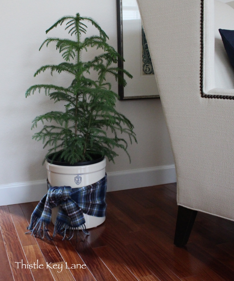 Pine tree with a wool plaid scarf