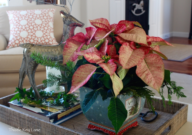 Fresh pine branches and cedar added to the poinsettia.