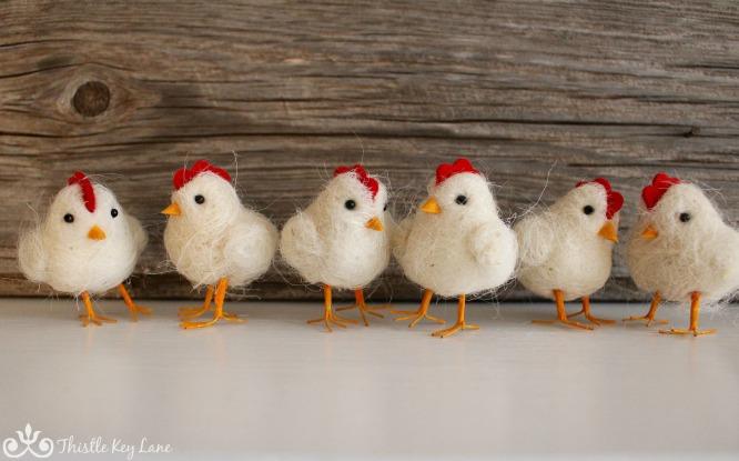 Chicken photo session 1