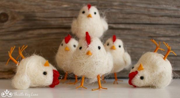 Chicken photo session 4