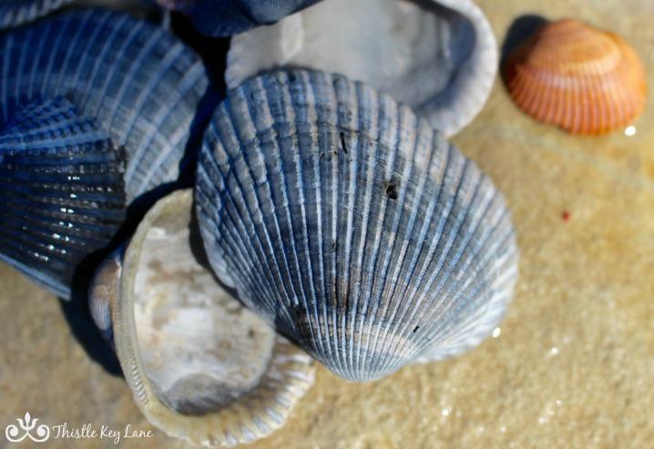 Blue Sea Shells