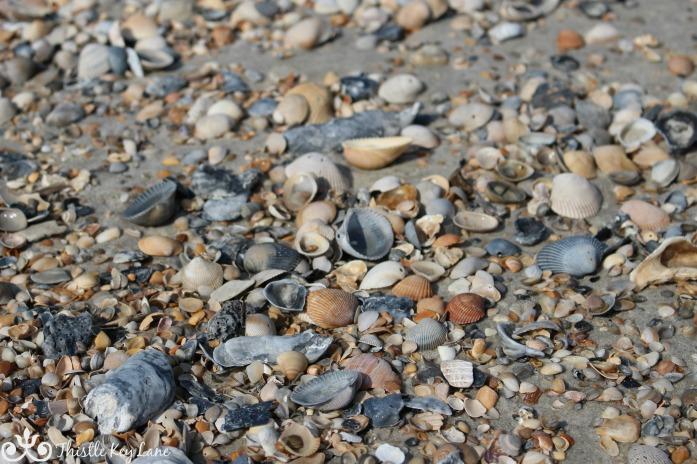 Treasure hunting on the beach