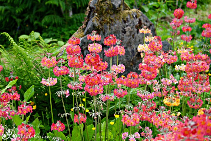 Pink and Coral Clan Donald Centre Gardens