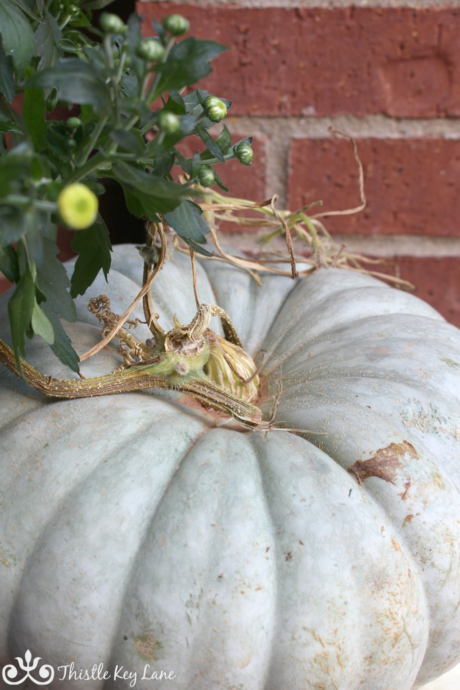 Yellow mum and grey pumpkins say fall.