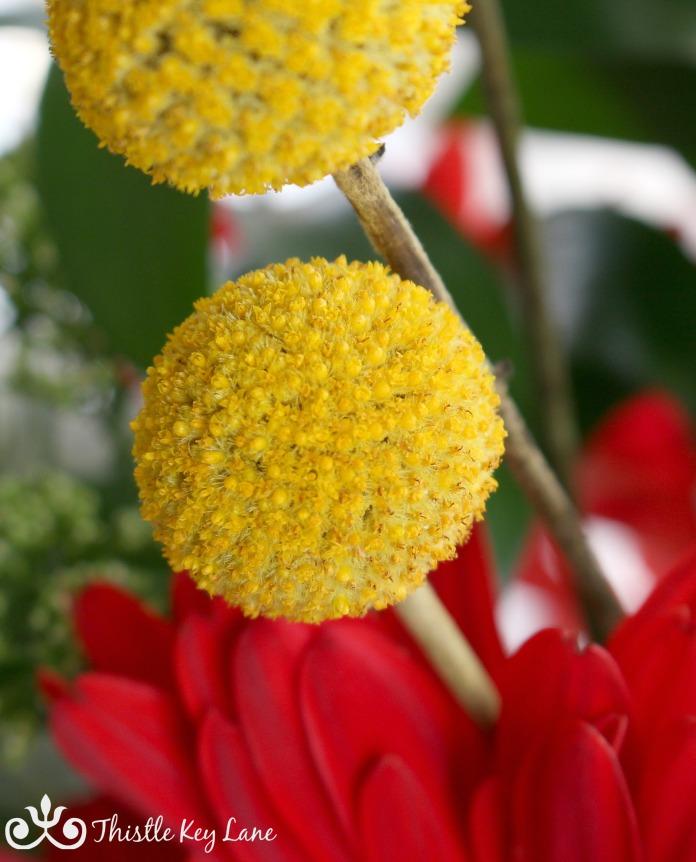 yellow-pom-pom-flower-crazy