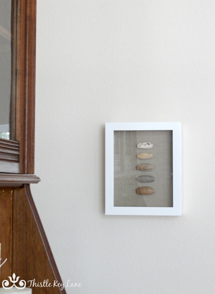 Beautiful shells from a wonderful weekend at the beach displayed in a shadow box.