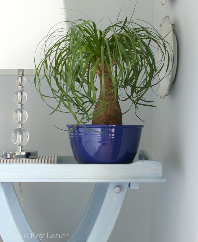 Ponytail Palm - House Plants and Succulents