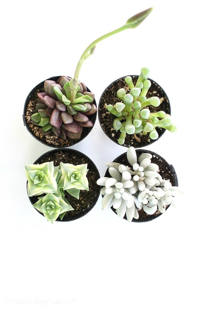 Succulents and House Plants